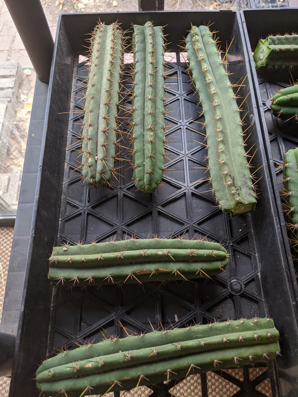 misc seedling tips.