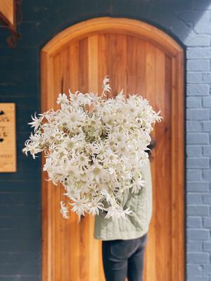 Flannel Flower Bunch
