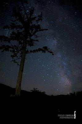 The Redwood Galaxy