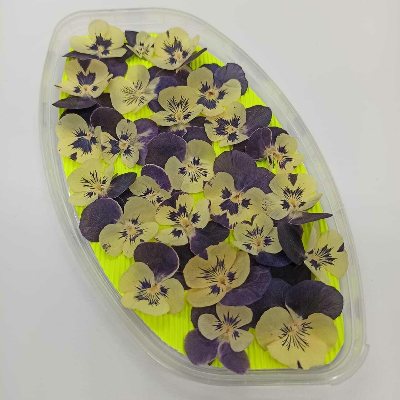 Обезвоженные съедобные цветы. Виола Дикий ангел. 20 шт.