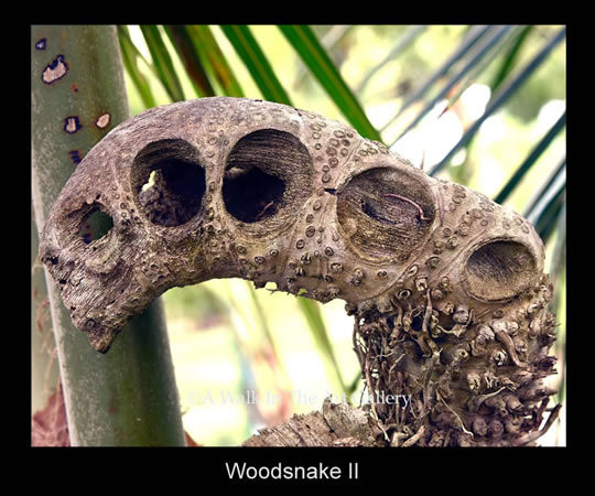 Woodsnake Photographic Print