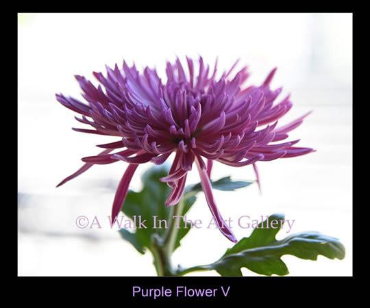 Purple Flower V Photographic Print