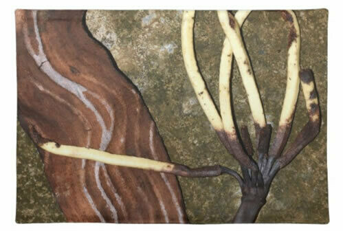 Fingers - Patterns In Nature Series - Placemats & Napkins