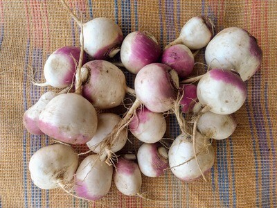 Purple Top Turnips 10 lb