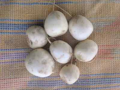 Hakurei Turnips 1 lb