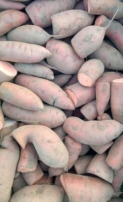 CSA - Sweet Potato, regular 5 lb