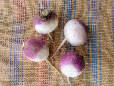 Purple Top Turnips 1 lb
