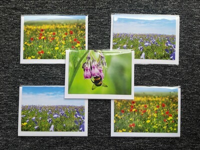 Greeting cards - pack of 5 mixed floral