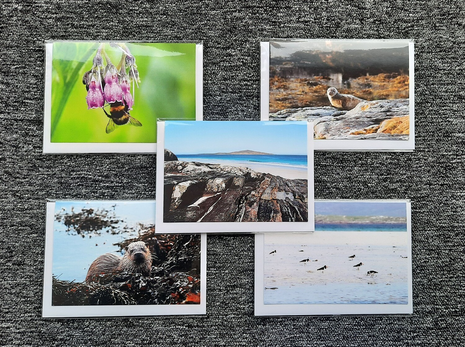 Greeting cards - pack of 5 mixed wildlife