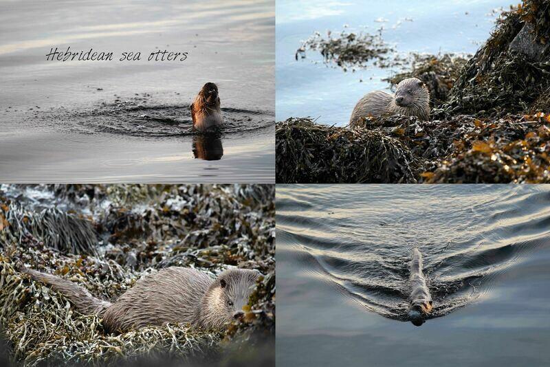 Otter (4) tea towel