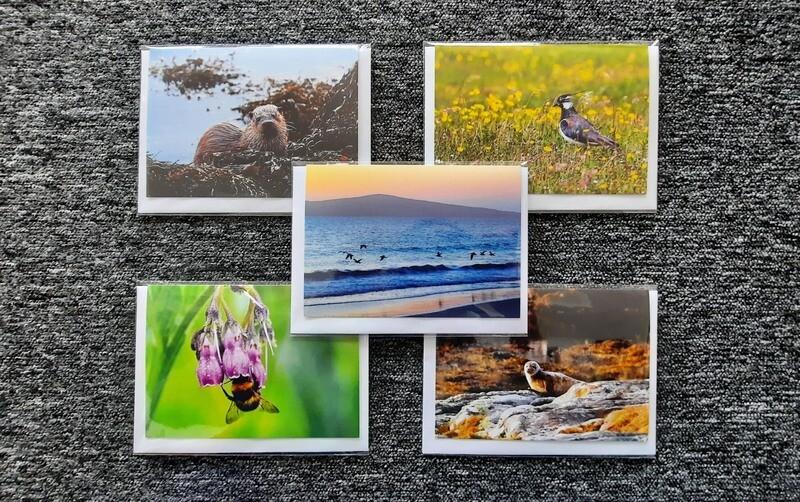 Wildlife greetings cards - pack of 5