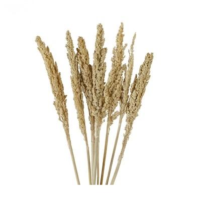 Dried Flower Stem (6 pieces)