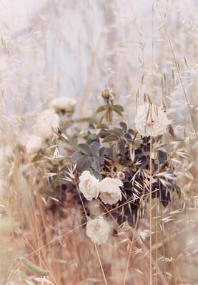 through the grasses