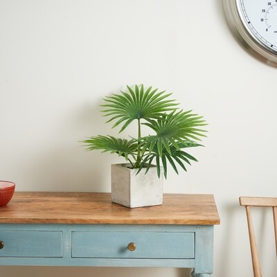 Tropical Leaves in a Cement Cube - Green