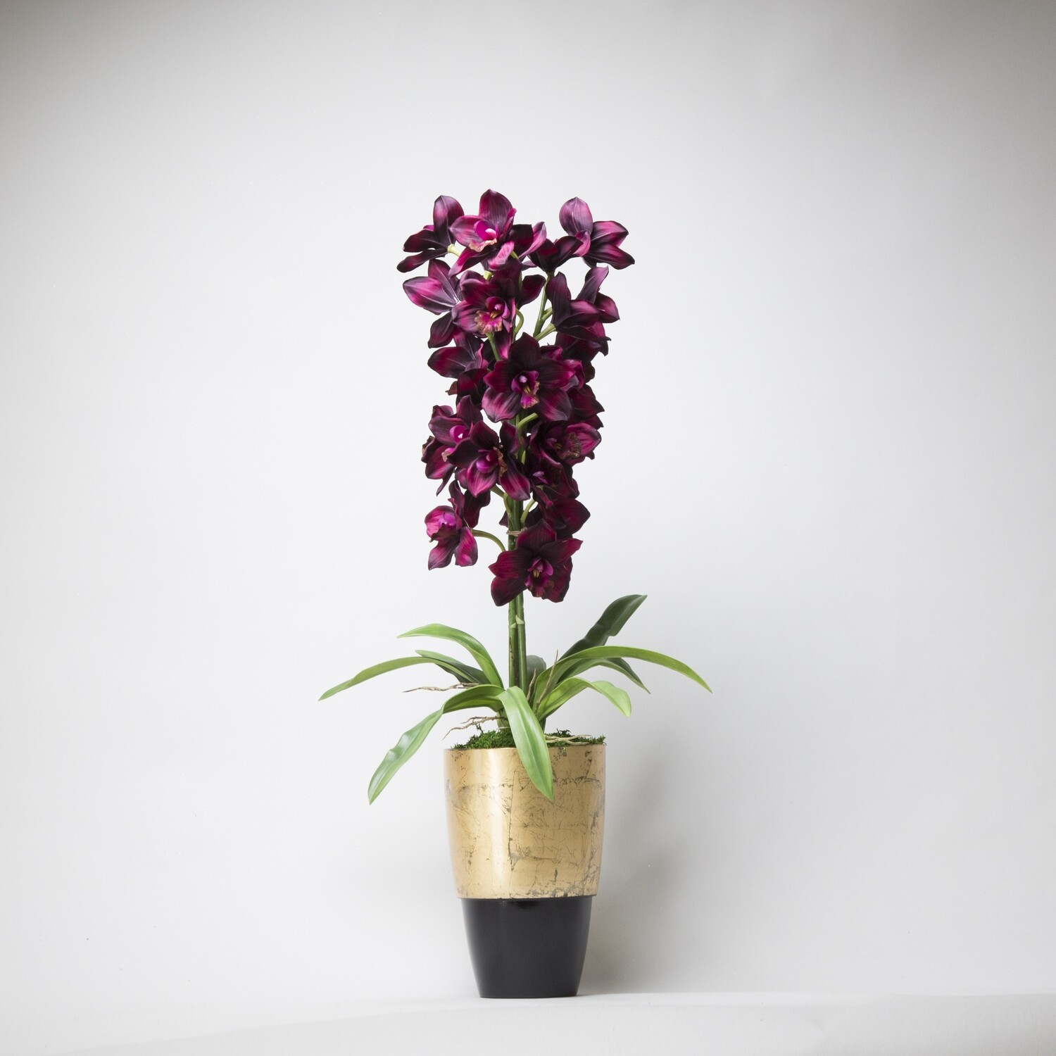 Tall Cymbidiums in a Golden and Black Vase