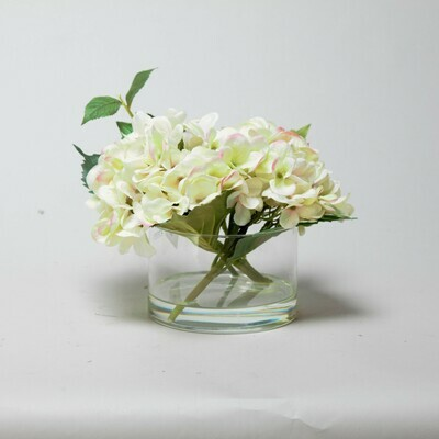 Cream Hydrangea with a pink fleck set in a cylinder vase