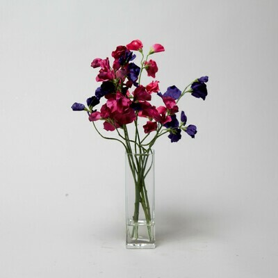 Dark pink and purple Sweet peas in a tall bud vase