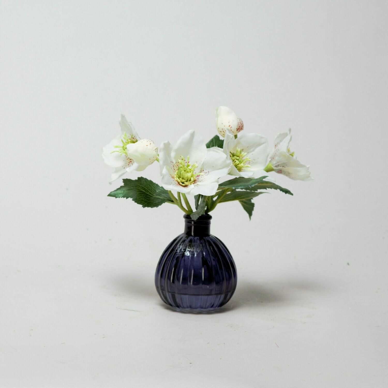 White Hellebores in a black bottle vase
