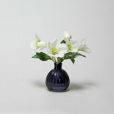 White Hellebores in a black bottle vase