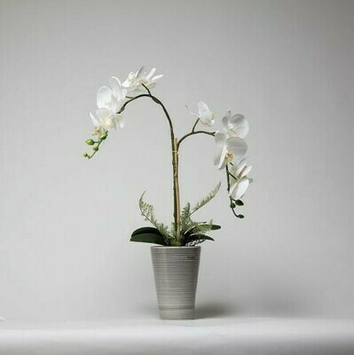 Phalaenopsis Orchid with Ferns in a Grey Ceramic Pot