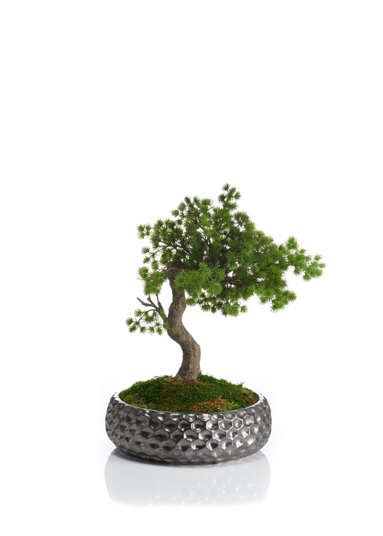 Bonsai in Metallic-effect Textured Pot