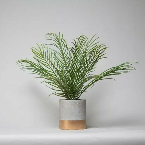 Palm in a Cement Pot