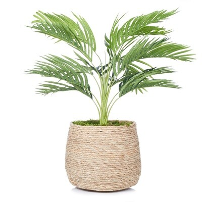 Palm in Basket