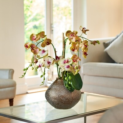 Phalaenopsis Orchid in a Dimpled Bronze-effect Ceramic Pot