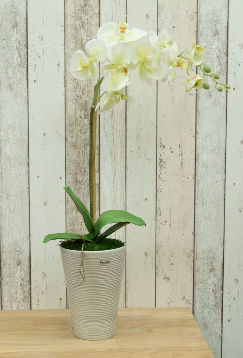 Artificial Phalaenopsis Orchid in a scratch grey pot- Cream/Green