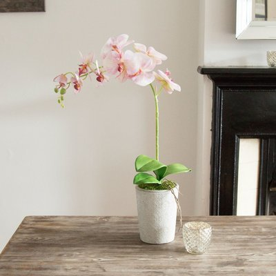 Phalenopsis Orchid in Tall Grey Pot - Pink Option
