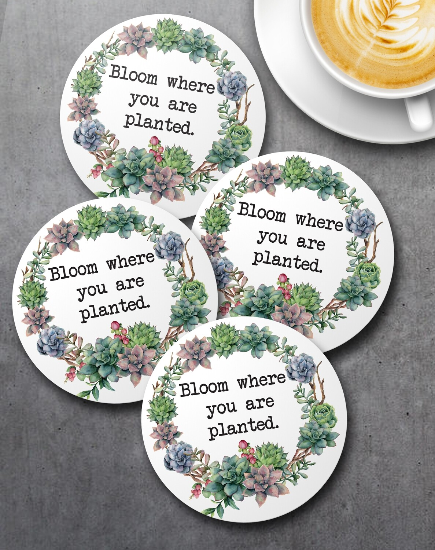 Succulents Coaster Set (4)