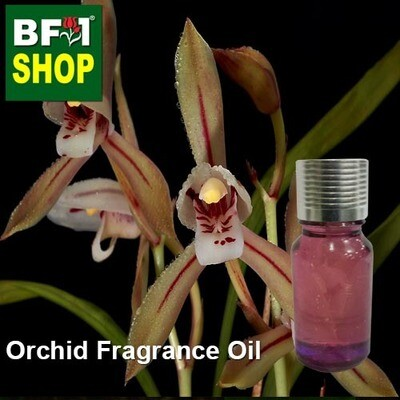Orchid Fragrance Oil-Bamboo-leaf orchid [Green] > Cymbidium javanicum var. aspidistrifolium-10ml