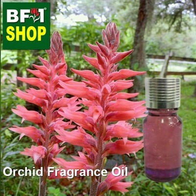 Orchid Fragrance Oil-Bearded orchid [Leafless] > Spiranthes lanceolata-10ml