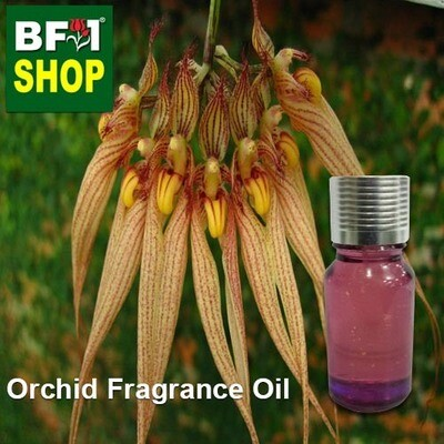 Orchid Fragrance Oil-Bearded bulbophylllum (Australia) > Bulbophyllum barbigerum-10ml