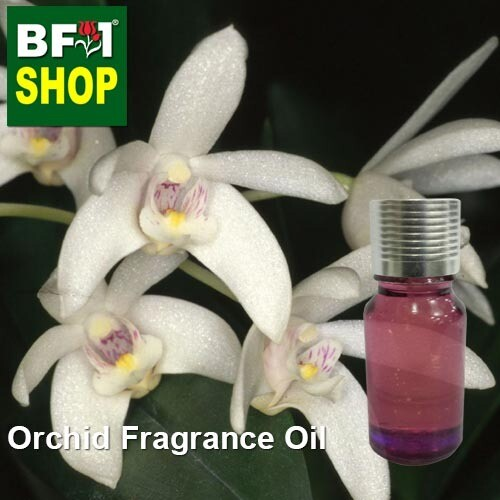 Orchid Fragrance Oil-Beech orchid (Australia) > Dendrobium falcarostrum-10ml