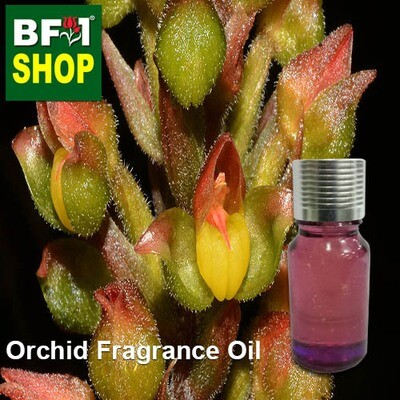 Orchid Fragarnce Oil-Jewel orchid > Hylophila-10ml