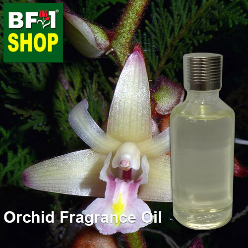 Orchid Fragrance Oil-Yellow ball orchid > Pomatocalpa brachybotrya-50ml