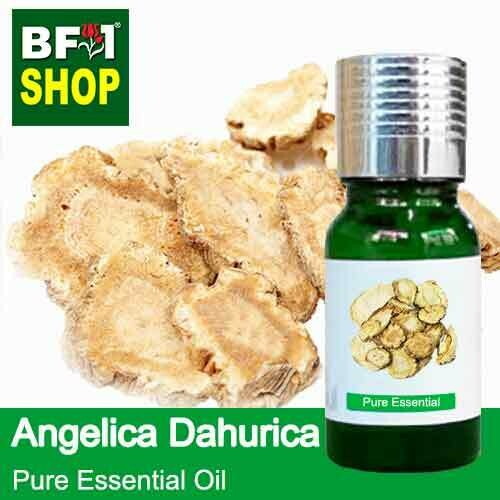 Pure Essential Oil (EO) - Angelica Dahurica Essential Oil - 10ml