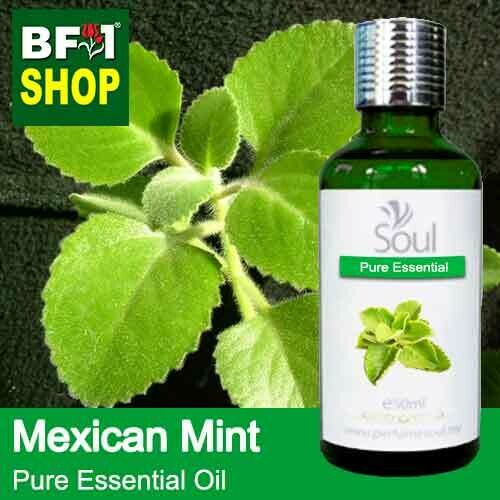 Pure Essential Oil (EO) - Mint - Mexican Mint ( Plectranthus Socotranum ) Essential Oil - 50ml
