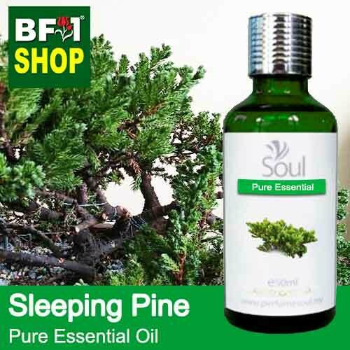 Pure Essential Oil (EO) - Pine - Sleeping Pine Essential Oil - 50ml
