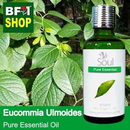 Pure Essential Oil (EO) - Eucommia Ulmoides Leaf Essential Oil - 50ml