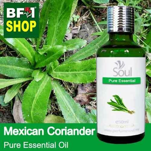 Pure Essential Oil (EO) - Mexican Coriander ( Eryngium Foetidum ) Essential Oil - 50ml