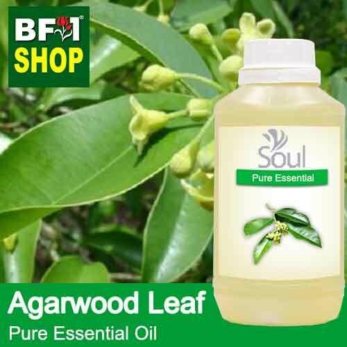 Pure Essential Oil (EO) - Agarwood Leaf Essential Oil - 500ml