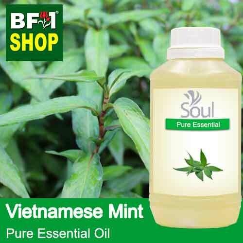 Pure Essential Oil (EO) - Mint - Vietnamese Mint ( Persicaria Odorata ) Essential Oil - 500ml