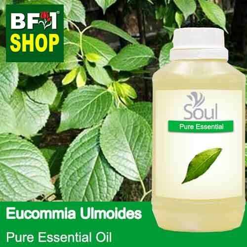Pure Essential Oil (EO) - Eucommia Ulmoides Leaf Essential Oil - 500ml