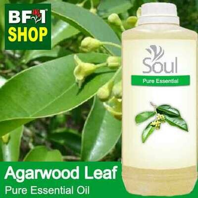 Pure Essential Oil (EO) - Agarwood Leaf Essential Oil - 1L