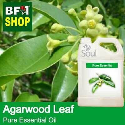 Pure Essential Oil (EO) - Agarwood Leaf Essential Oil - 5L