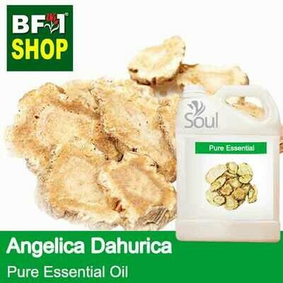 Pure Essential Oil (EO) - Angelica Dahurica Essential Oil - 5L