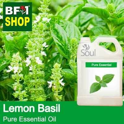 Pure Essential Oil (EO) - Basil - Lemon Basil ( Citriodorum Basil ) Essential Oil - 5L
