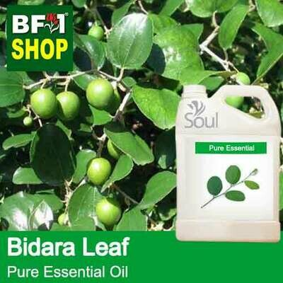 Pure Essential Oil (EO) - Bidara Leaf (Zizyphus Mauritiana )  Essential Oil - 5L